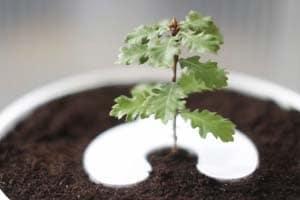 arbre-florian-leclerc